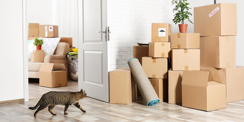 Как переехать в новую квартиру без проблем