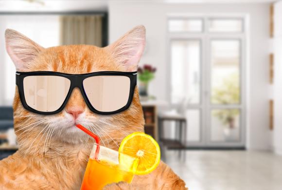 11 способов охладить квартиру без кондиционера
